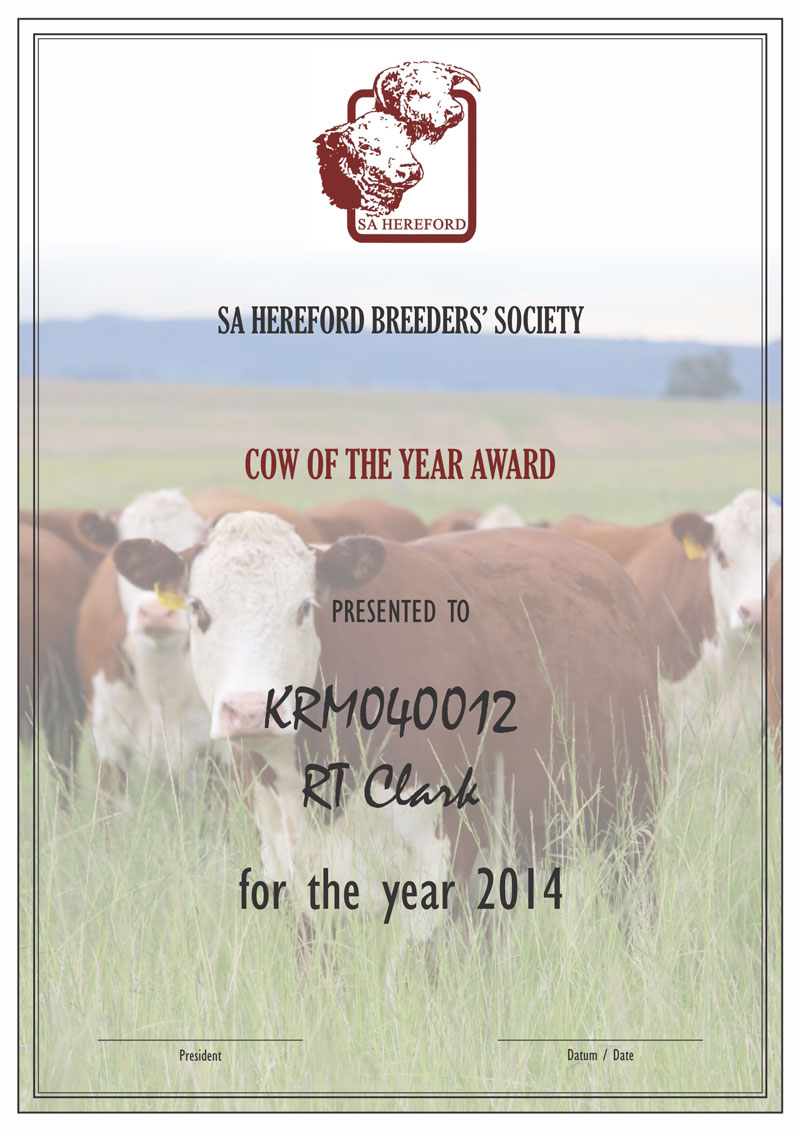 KRM Hereford Cow of the Year 2014